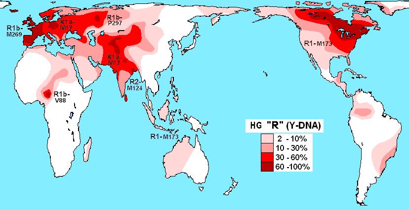Haplogroup_R_(Y-DNA).png